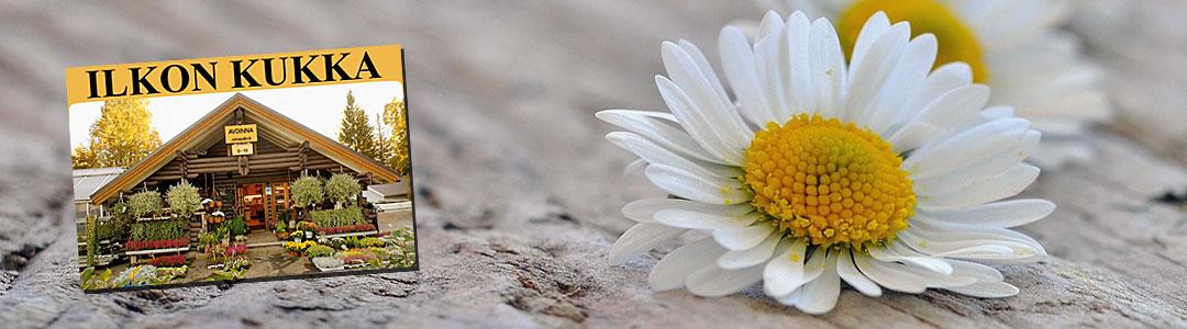 Ilkon Kukka